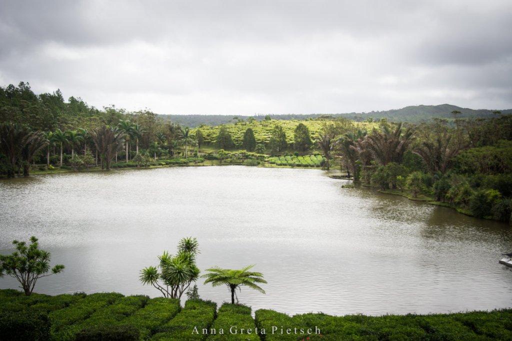 Bois_Cheri_Mauritius (FILEminimizer)