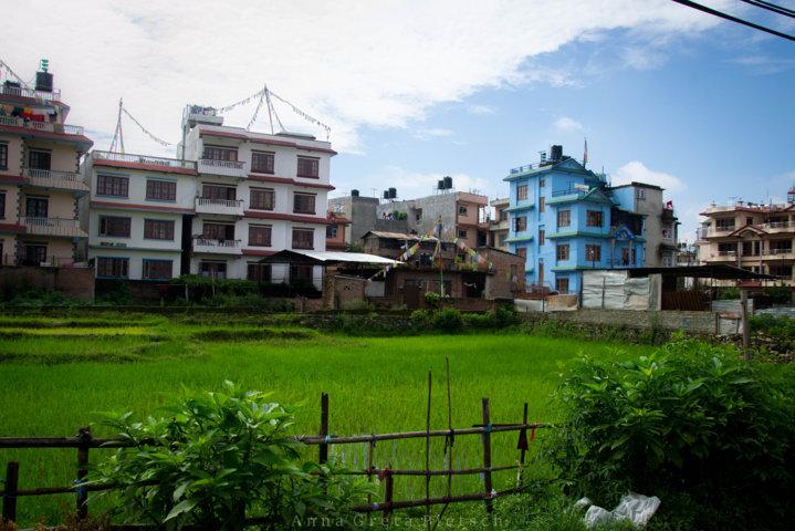 reisfeld_kathmandu_nepal
