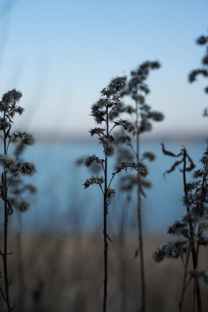 Getrocknete Blüten