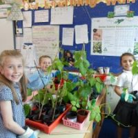 Year 3 gardening skills
