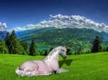 Unicornio_copia