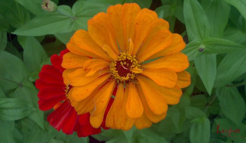 Flowers, 7 July 2013