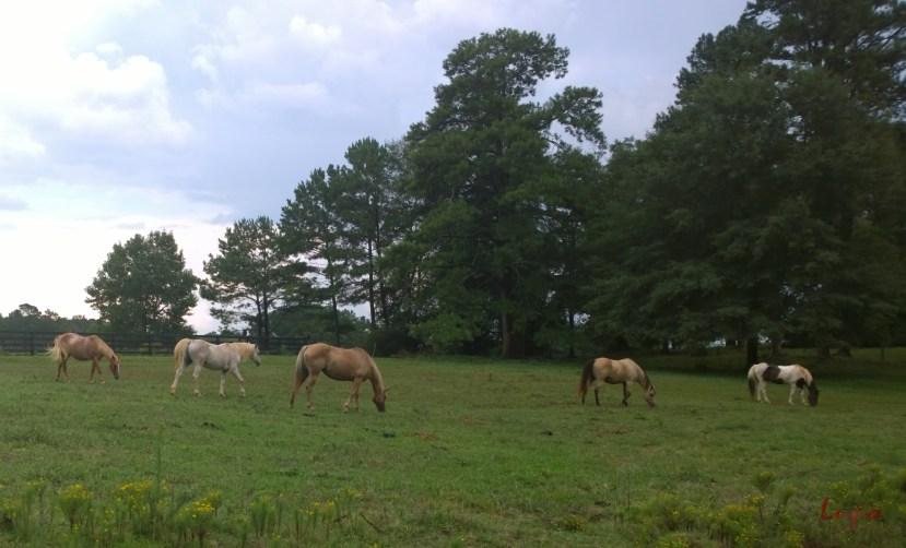 Serenbe Horses #3, 17 August 2014