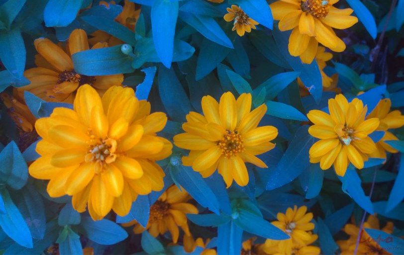 Flowers, West Peachtree, 14 August 2014