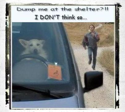 Doggie driving away