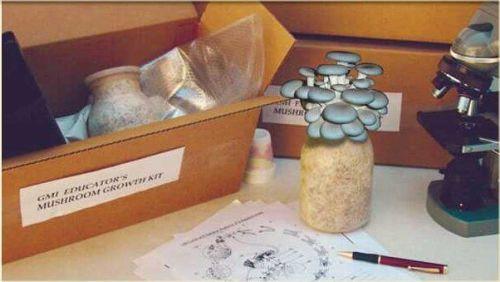 Educator's Mushroom Kit