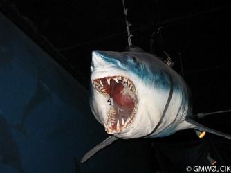 20050807-Aquarium 109