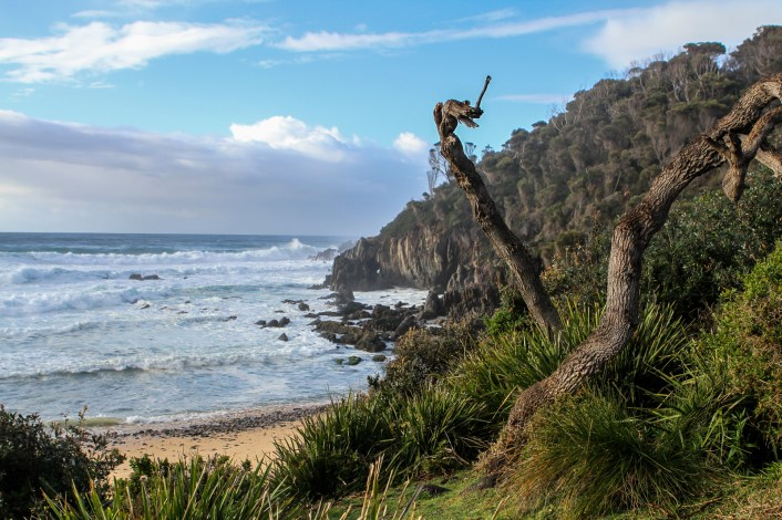 Mimosa rocks NP in Australia - got to see whales and lyrebirds!