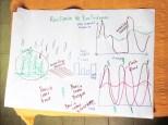 Resliencia de EcoSistemas. Ecosistema maduro y resiliente (el bosque) como modelo para seguir en los sistemas humanos.