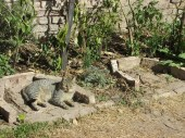 cat in huerta