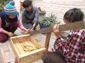 permacultura para deptos cold frame visita de tierra junio 22 03 small