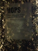 Ever wonder what the hell hops are? These.