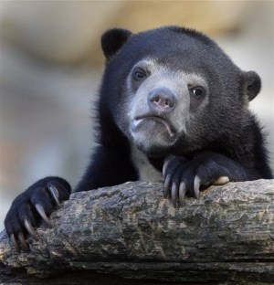 Confession-Bear