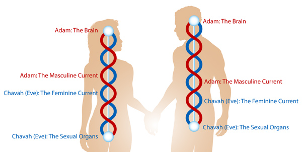 adam-and-eve-currents