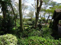 Green scene at Sarova Lion Hill Game Lodge