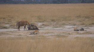 A family of hyenas