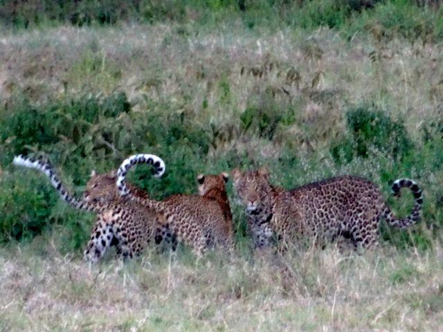 130824 Aberdare National Park – Lake Nakuru National Park