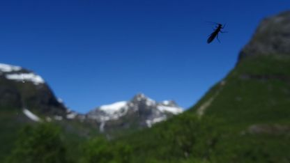 An insect gets better focus than the scenery