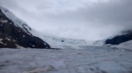 Glacier Fields