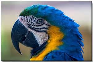 Bird McCaw
