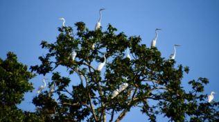 Cranes craning.