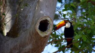 That hole is the toucans home.