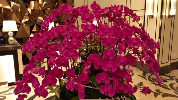 Orchids in the foyer