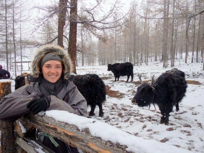Helping Ut with her yaks, northern Mongolia