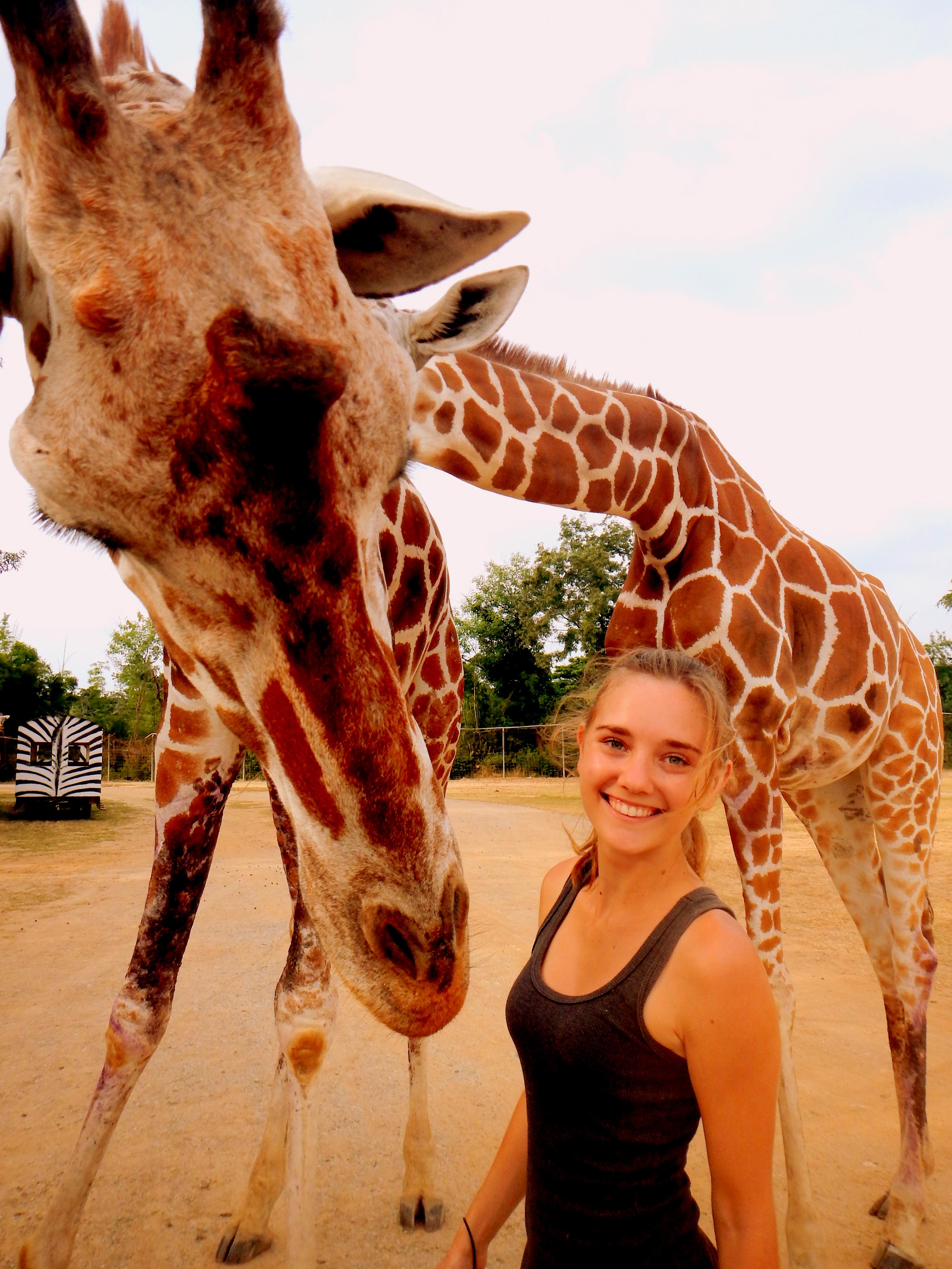 Giraffe at the Safari Park Zoo, Kanchanaburi, Thailand
