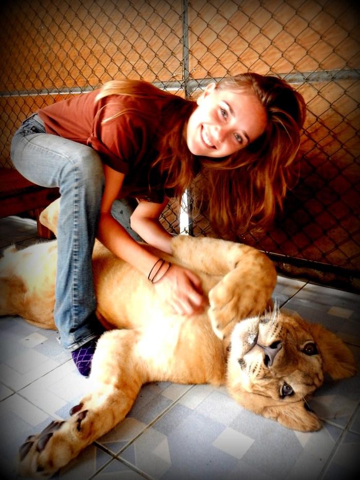 With Simba the lion at the Safari Park Zoo Volunteer Project, Kanchanaburi, Thailand