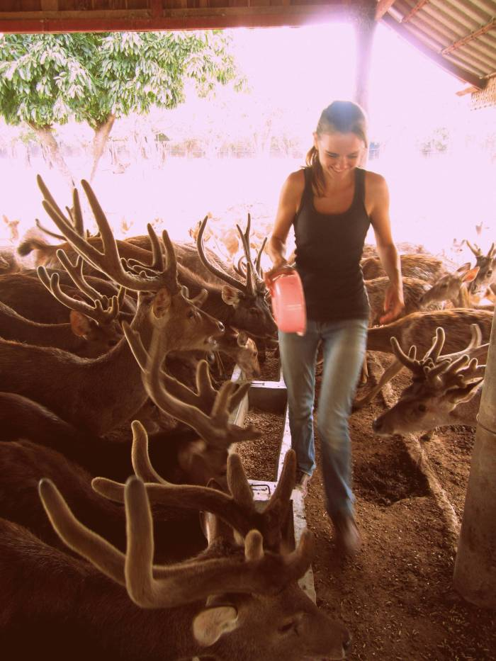 the Safari Park Zoo Volunteer Project, Kanchanaburi, Thailand