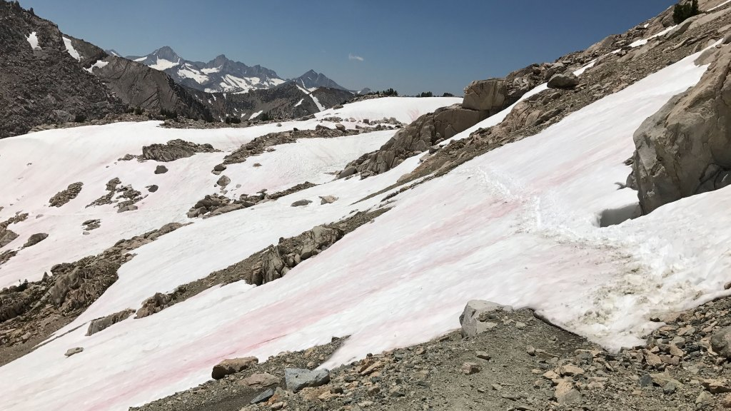 Watermelon Snow on Glen Pass on the John Muir Trail (JMT)