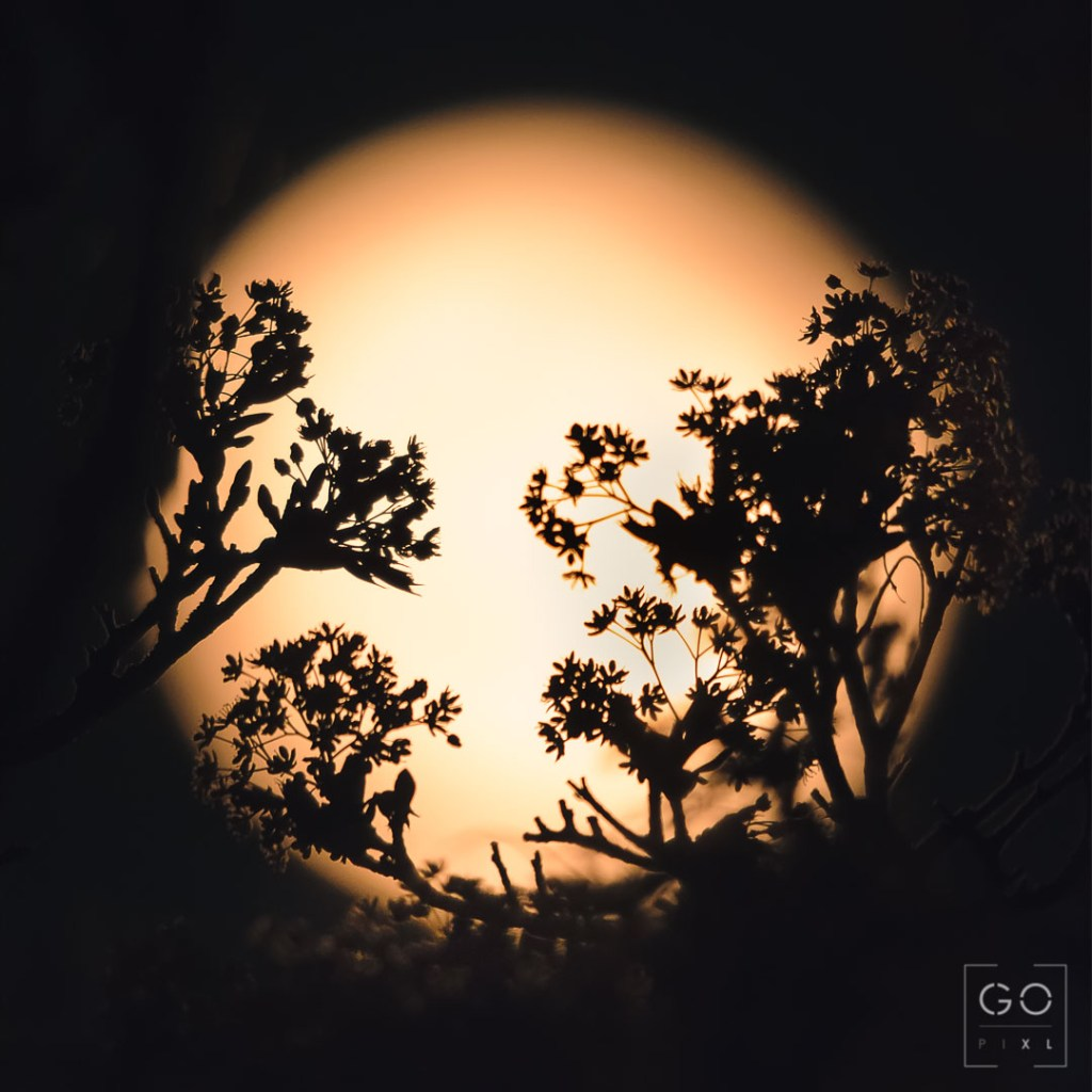 Supermoon behind the trees