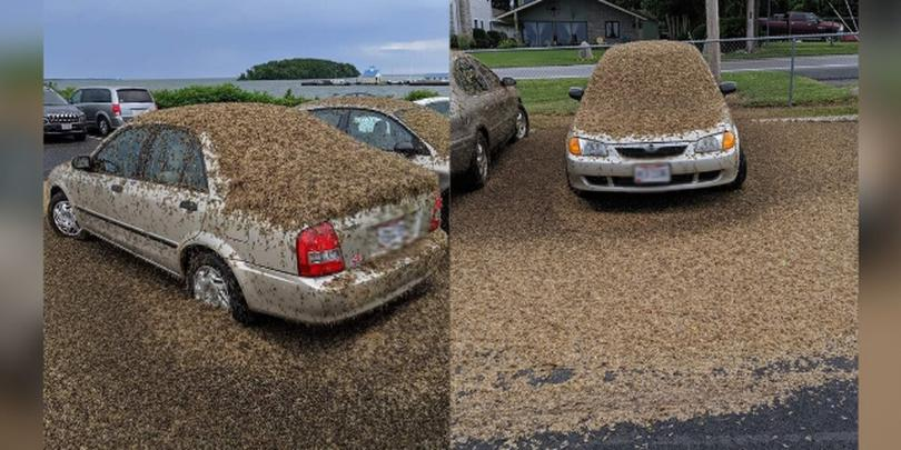 Viral photo shows millions of mayflies covering a Port Clinton, Ohio car
