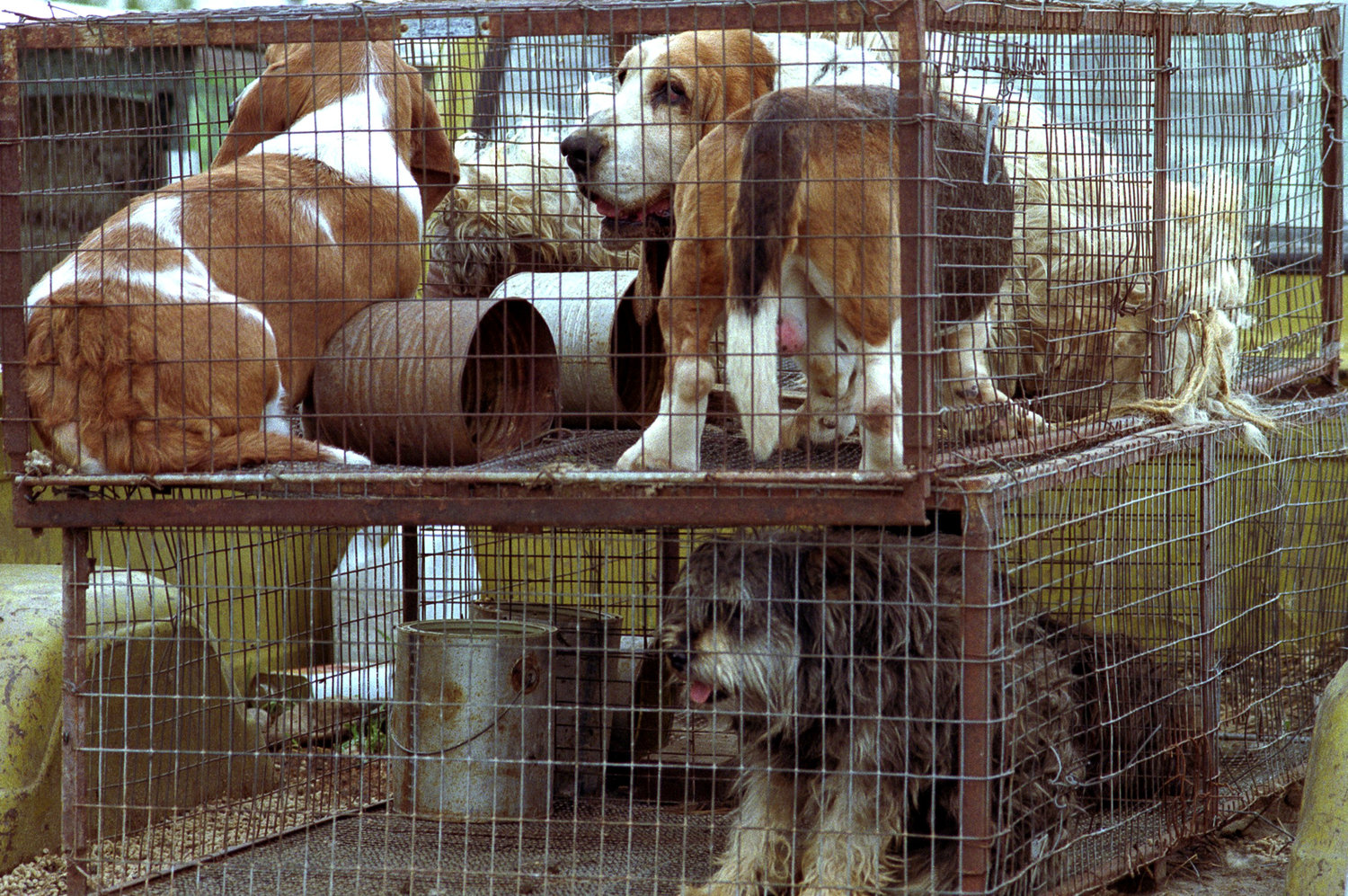 Police: 150 dogs, one dead, found at suspected puppy mill owned by
