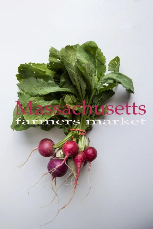 Organic Radishes for Massachusetts Farmers Markets Photo Gallery