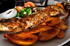 image5 fish