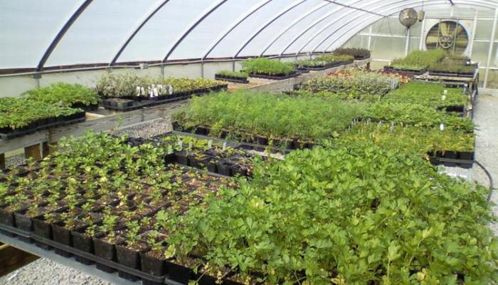 greenhouse-in-goa