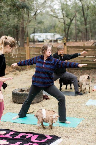 Goat Yoga-45