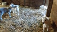 barn babes waiting