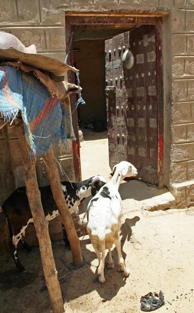 goat_door