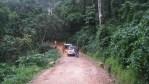 Tracking the Elusive Chimpanzees of Nyungwe