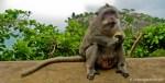 Photo Favorite: Bali Monkey