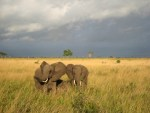 Visiting Selous Game Reserve in Tanzania