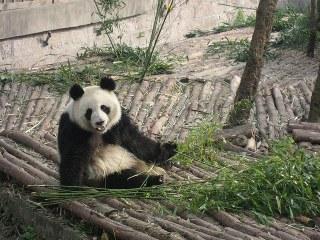 Top 5 Things to Do in Chengdu, China