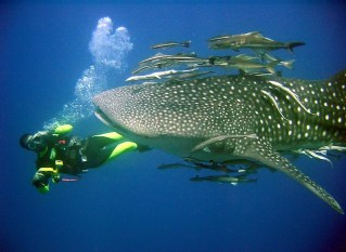 The Best Dive Sites in the Gulf of Thailand