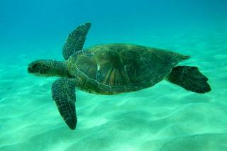 5 Hawaiian Adventures You Can't Miss