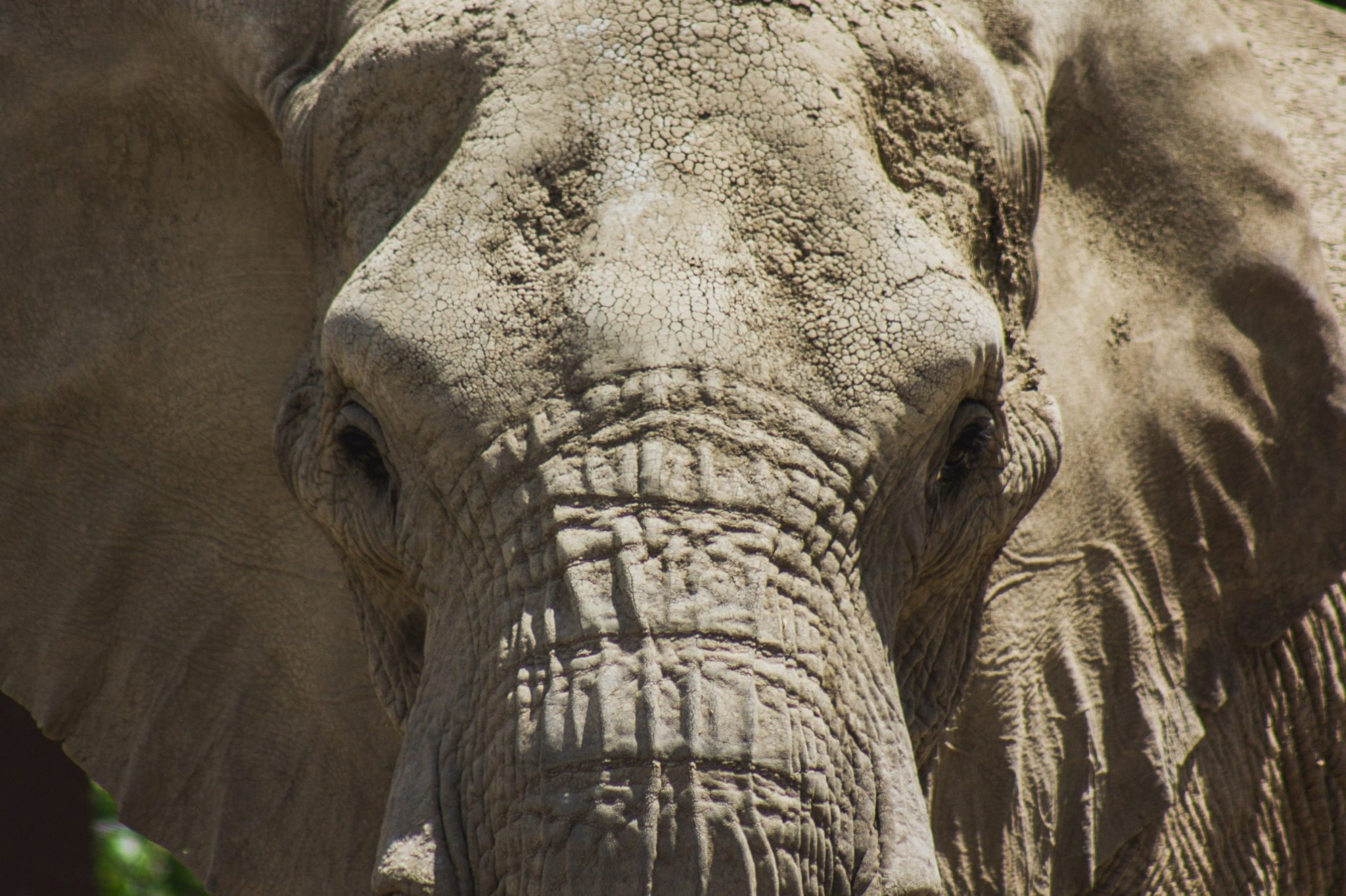 Elephant never Forgets – Evernote: The Writer's Journal