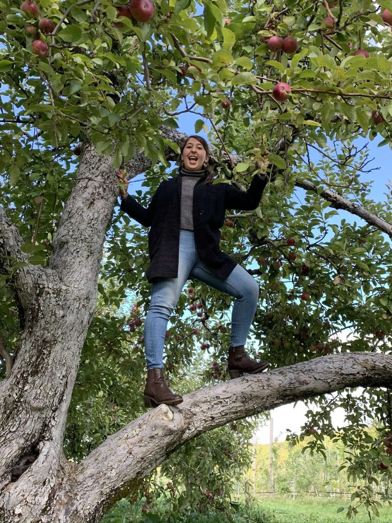 Photo of a woman standing on a tree limb in an apple orchard.