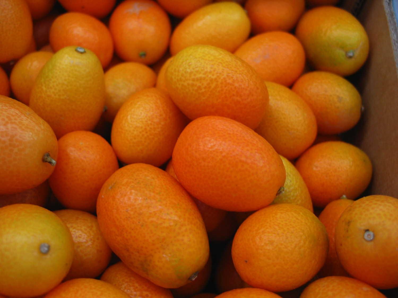 kumquat3760